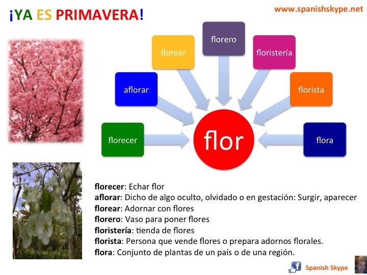 Flor: familia de palabras